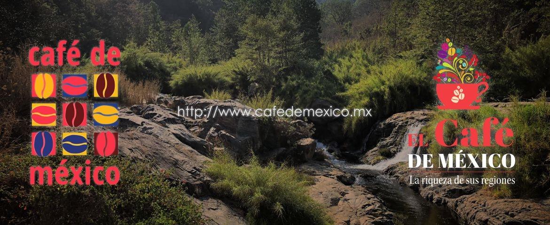 El Café de México: La riqueza de sus regiones